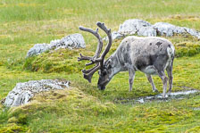aka-Spitsbergen-2013-07-16__D3X0342.jpg