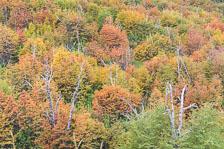 aka-Autumn-Colours-2014-04-20__D8X7898_899_900.jpg