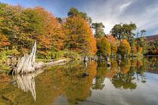 aka-Autumn-Colours-2014-04-23__D8X8569_70_71.jpg