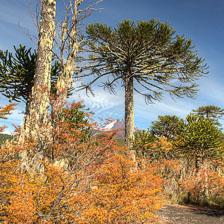 aka-Autumn-Colours-2014-04-23__D8X8594_5_6.jpg