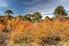 aka-Autumn-Colours-2014-04-23__D8X8608_09_10.jpg
