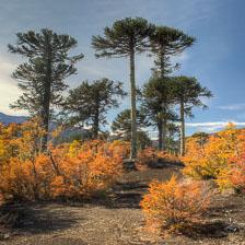 aka-Autumn-Colours-2014-04-23__D8X8622_3_4.jpg