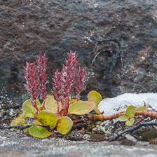 aka-Iceland-Greenland-2015-09-03__D3X0128.jpg