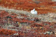 aka-Iceland-Greenland-2015-09-06__D3X1659.jpg
