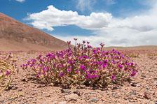 aka-Atacama-2017-01-02__D5X7259.jpg