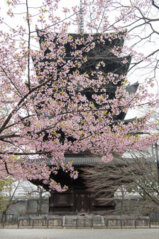 aka-Japan-2017-03-26__D5X1172-Edit.jpg