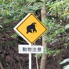 aka-Japan-2017-04-05__D5X5154.jpg