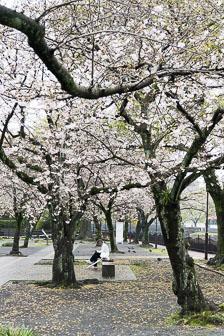 aka-Japan-2017-04-08__D5X6136.jpg