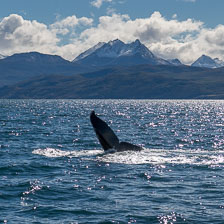 aka-Patagonia-2018-03-13__D5X2049.jpg