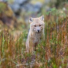 aka-Patagonia-2018-03-18__D5X3966.jpg