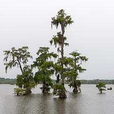 aka-Louisiana-2018-06-18__D5X0347.jpg