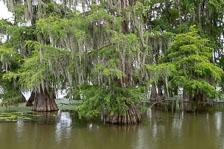 aka-Louisiana-2018-06-18__D5X0359.jpg