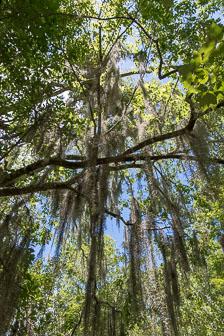 aka-Louisiana-2018-06-24__D5X1835.jpg