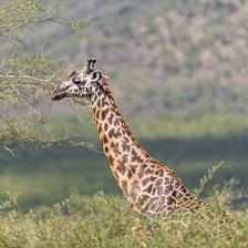 aka-Tanzania-2019-02-03__D5X5345.jpg