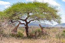 aka-Tanzania-2019-02-03__D8X1506.jpg