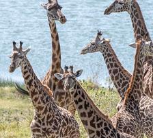 aka-Tanzania-2019-02-06__D5X5874.jpg