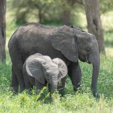 aka-Tanzania-2019-02-07__D5X6526.jpg