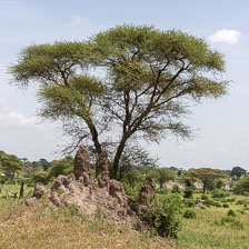 aka-Tanzania-2019-02-07__D8X1659.jpg