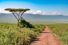 aka-Tanzania-2019-02-10__D8X1789.jpg