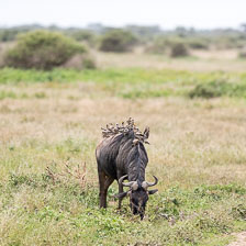 aka-Tanzania-2019-02-11__D5X8705.jpg