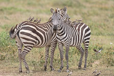 aka-Tanzania-2019-02-11__D5X8714.jpg