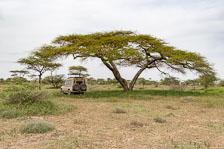 aka-Tanzania-2019-02-11__D8X1858.jpg