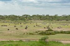 aka-Tanzania-2019-02-11__D8X1891.jpg
