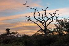 aka-Tanzania-2019-02-12__D5X9011.jpg