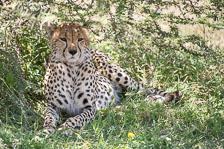 aka-Tanzania-2019-02-12__D5X9398.jpg