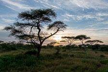 aka-Tanzania-2019-02-12__D8X1949.jpg