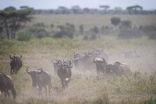 aka-Tanzania-2019-02-13__D5X9725.jpg
