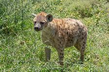 aka-Tanzania-2019-02-13__D8X2052.jpg