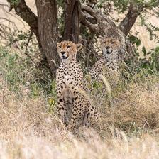 aka-Tanzania-2019-02-15__D5X0864.jpg