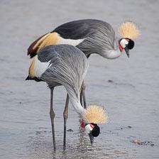 aka-Tanzania-2019-02-16__D5X1066.jpg
