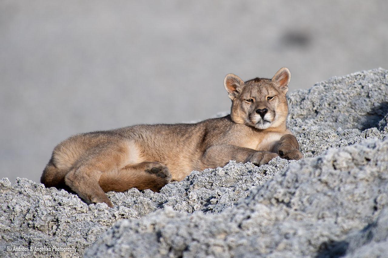 aka-Puma-2019-09-26__D5X7754.jpg