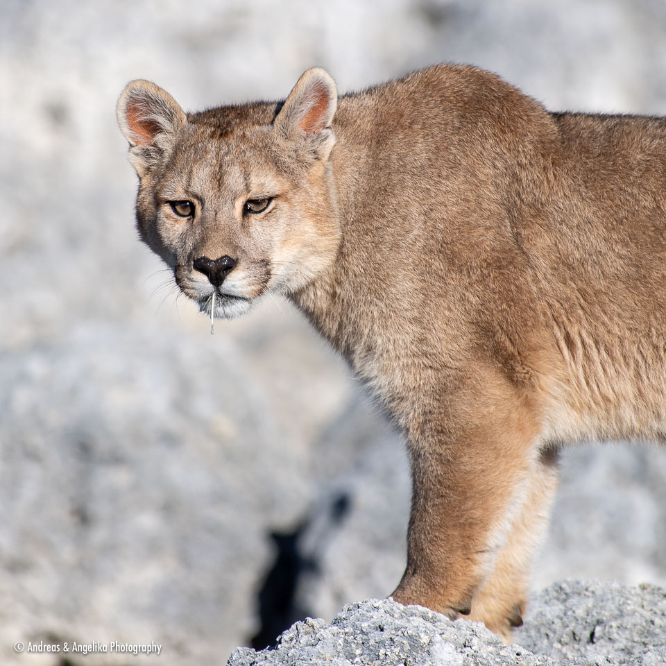 aka-Puma-2019-09-26__D5X7835.jpg