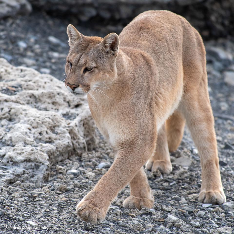 aka-Puma-2019-09-27__D5X8380.jpg