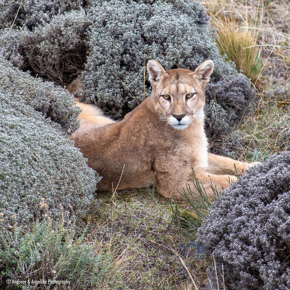 aka-Puma-2019-09-27__D5X8610.jpg