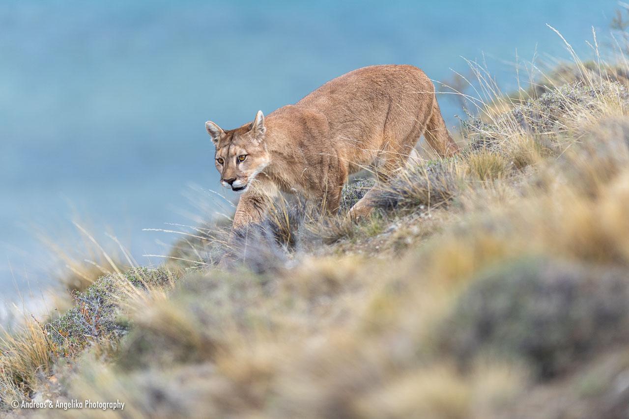aka-Puma-2019-09-27__D5X8676.jpg