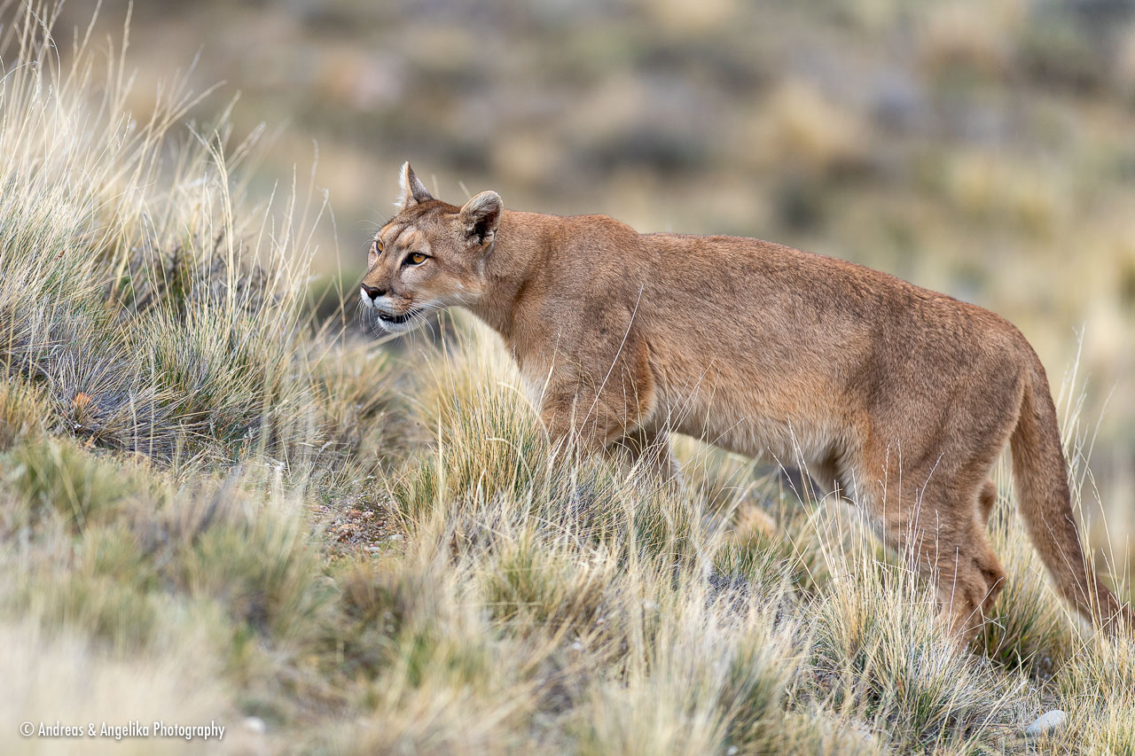 aka-Puma-2019-09-27__D5X8693.jpg