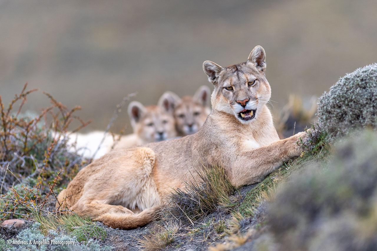 aka-Puma-2019-09-27__D5X9010.jpg