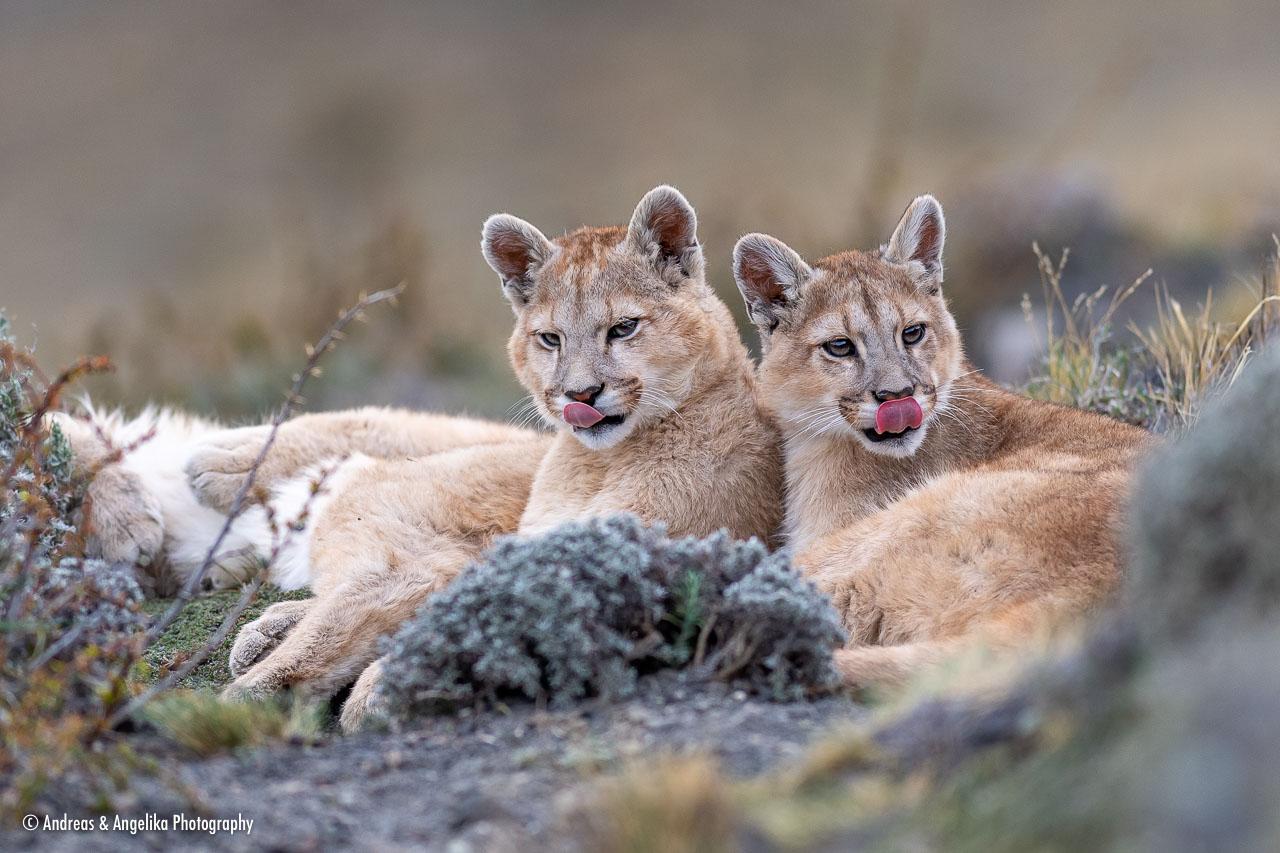 aka-Puma-2019-09-27__D5X9092.jpg