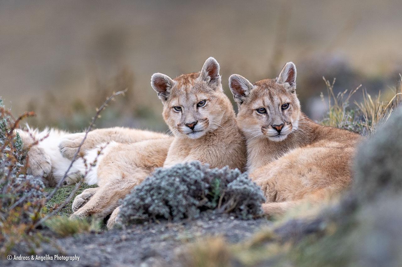 aka-Puma-2019-09-27__D5X9093.jpg