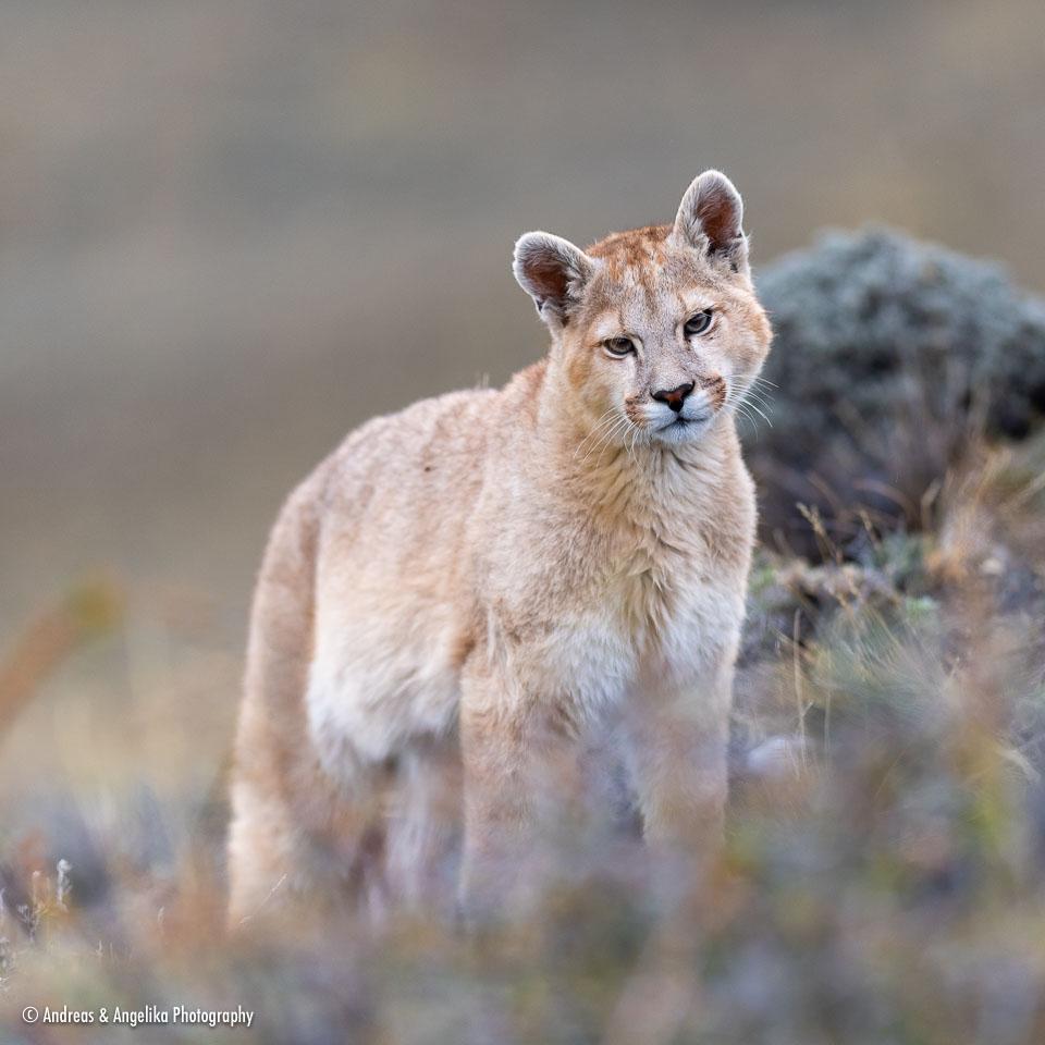 aka-Puma-2019-09-27__D5X9135.jpg