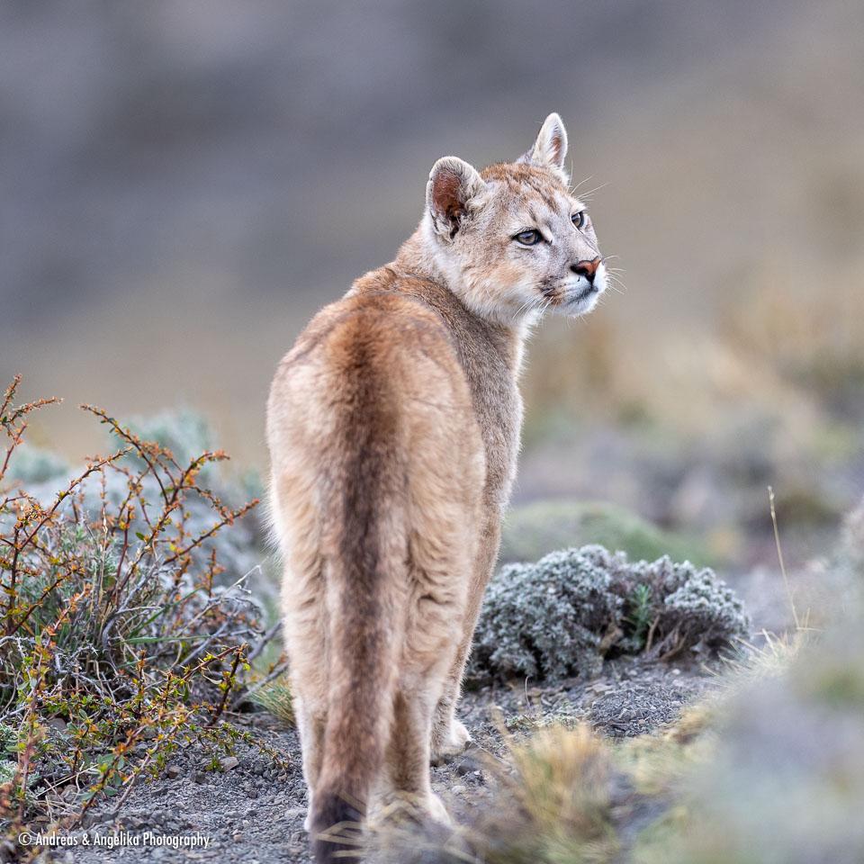 aka-Puma-2019-09-27__D5X9207.jpg