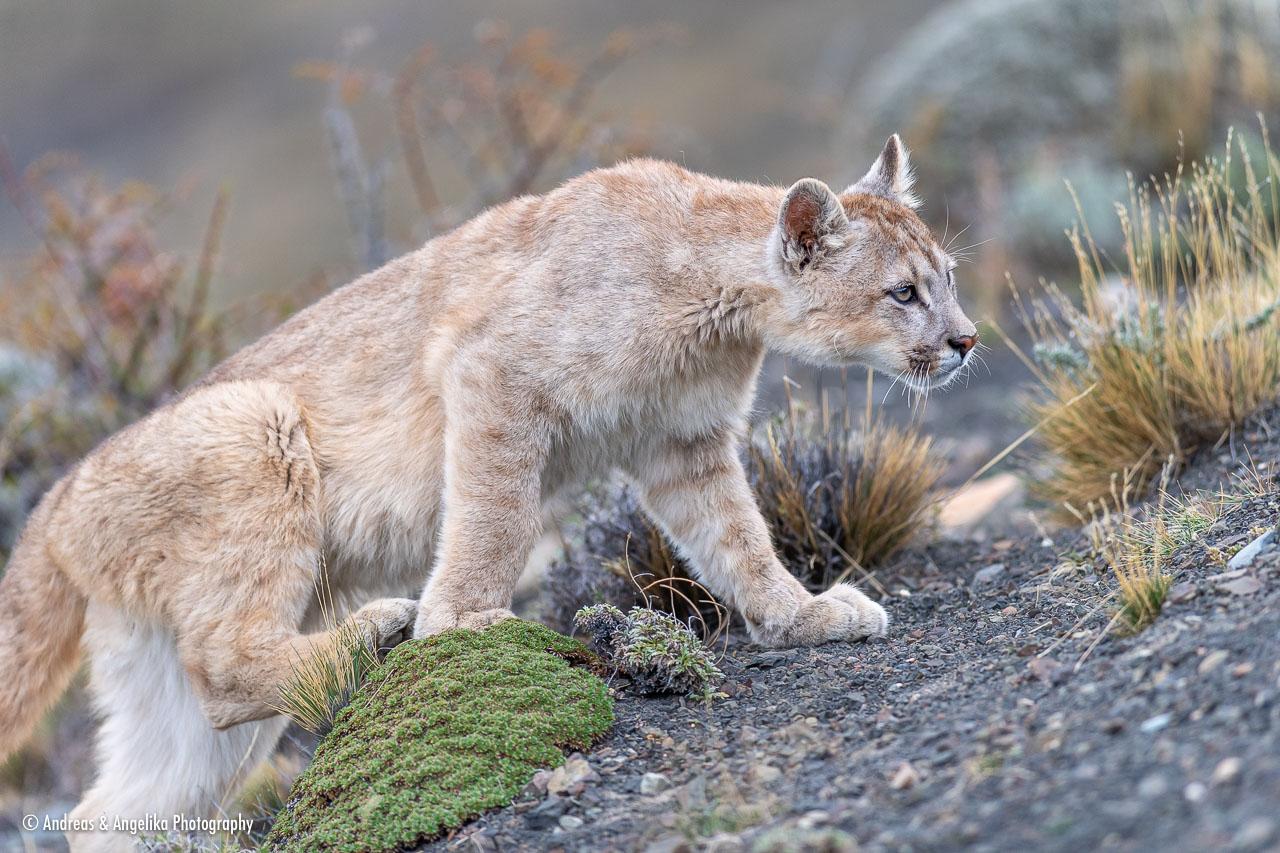 aka-Puma-2019-09-27__D5X9211.jpg