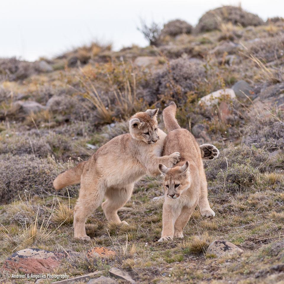aka-Puma-2019-09-27__D5X9478.jpg
