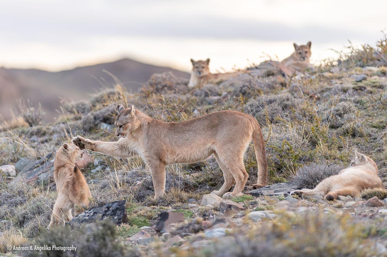 aka-Puma-2019-09-27__D5X9771.jpg