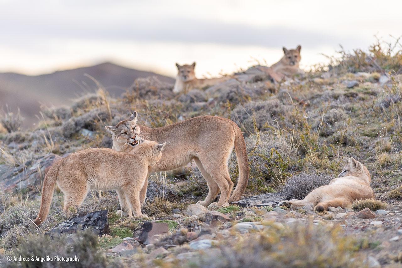 aka-Puma-2019-09-27__D5X9786.jpg