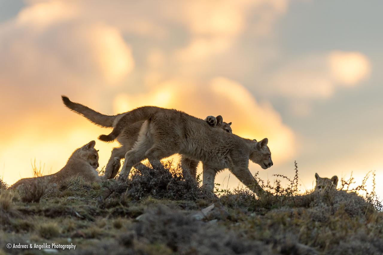 aka-Puma-2019-09-27__D5X9835.jpg
